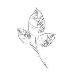 Leaves ecolgoy symbol vector
