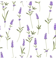 Seamless pattern of lavender vector