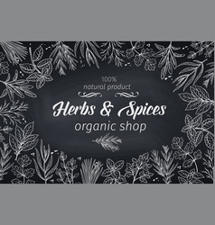 sketch herbs vector image