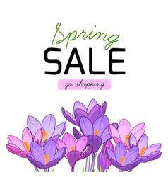 spring sale shopping purple violet crocus flowers vector image