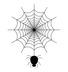black spider on the spider web icon vector image