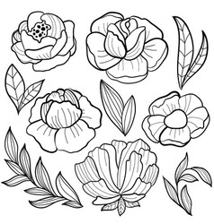 roses flower vector image