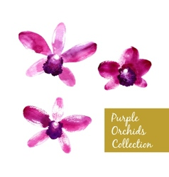 Collection of purple watercolor orchids vector image vector image