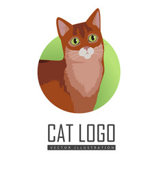 Somali cat flat design vector