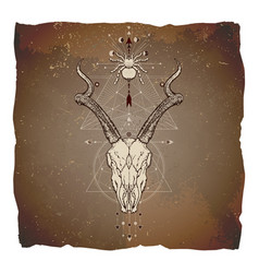 Antelope skull and spider vector