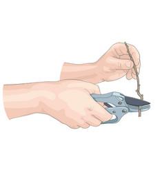 Hands gardener vector