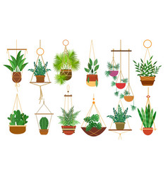 Hanging pots plants vector