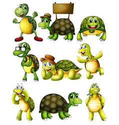 Turtle actions vector image