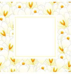 white crocus flower banner card vector image