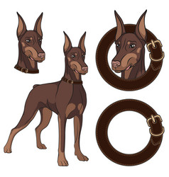 set of doberman colored in a collar vector image vector image