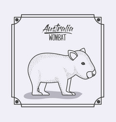 Australia wombat in frame and monochrome vector