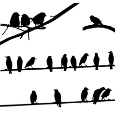 Birds on Wires silhouette set vector