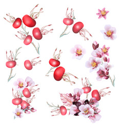 collection cherry flowers and wild rose vector image