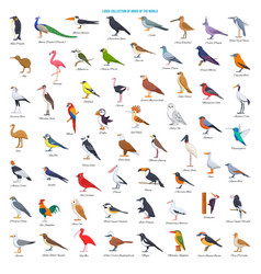 Large collection birds world vector