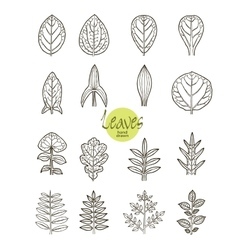 Collection of varieties of leaf shape vector