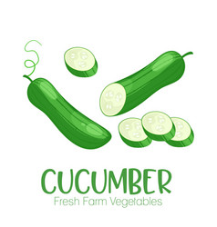 cucumber isolated on white background vector image