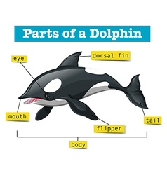 Diagram showing parts of dolphin vector