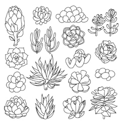 Isolated black outlines of succulents vector image