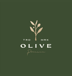 olive branch sophisticated aesthetic logo icon vector image