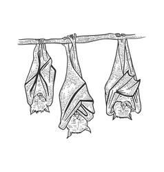 sleeping bats sketch engraving vector image