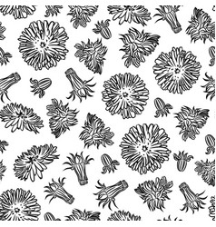 dandelion medical plant seamless pattern il vector image