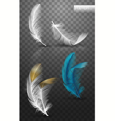 isolated falling fluffy twirled feathers vector image