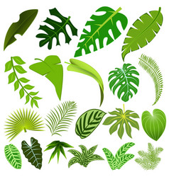 set leaves tropical plants and trees vector image