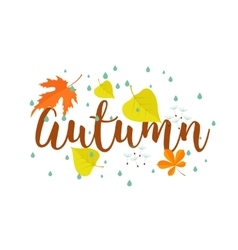 Autumn Calligraphy text rain and leaves vector image