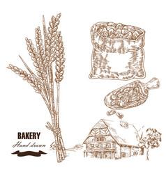 cereals set hand drawn sketch wheat rye farm vector image