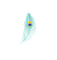 Icon peacock feather vector