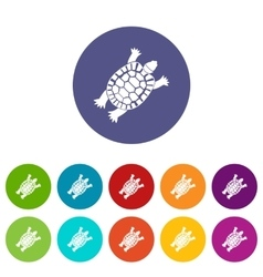 Turtle set icons vector