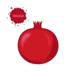 Pomegranate fruit isolated on white background vector image