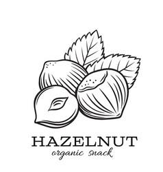 hand drawn hazelnut vector image
