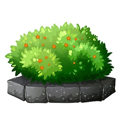 A flowering plant above the gray stone vector image