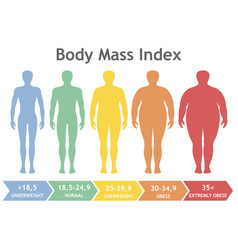 body mass index underweight to extremely obese vector image