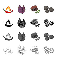Chili pepper spice basil coffee beans black vector