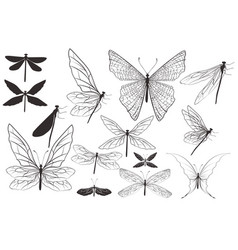 collection dragonflies and butterflies vector image