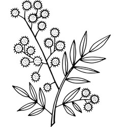 mimosa branch - coloring page isolated doodle and vector image vector image