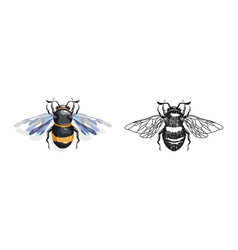 cartoon and drawing bees vector image
