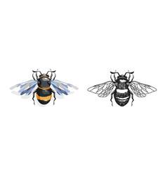 Cartoon and drawing bees vector