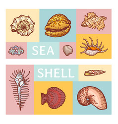 Sea shell cartoon icon vector