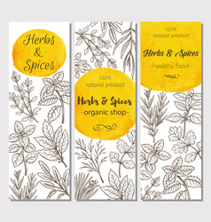 sketch herbs and spices vector image
