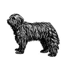 old english shepherd bobtail dog vintage vector image
