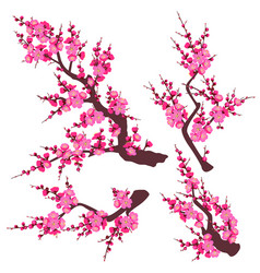 Pink plum blossom branch set vector