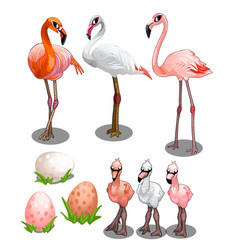 Group of large and small flamingos with eggs vector