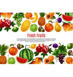 Poster of fresh garden or tropical fruits vector