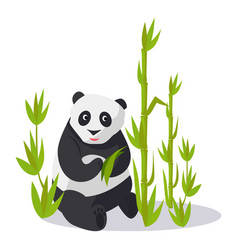 Panda sitting between bamboo holds green leaves vector