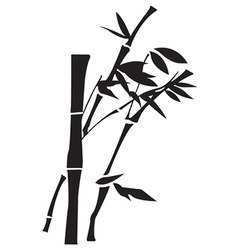 Bamboo design vector image