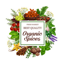 Organic herb and spice seasonings market vector
