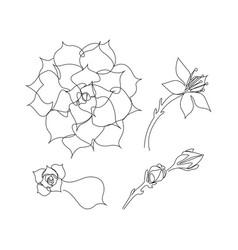 Set continuous line succulents vector